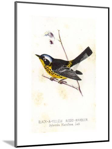 Vintage Bird--Mounted Art Print