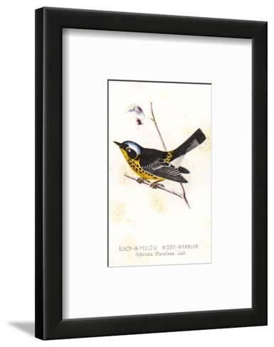 Vintage Bird--Framed Art Print