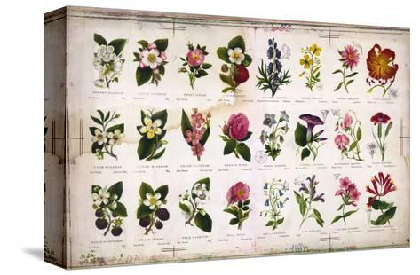 Vintage Botanical--Stretched Canvas Print