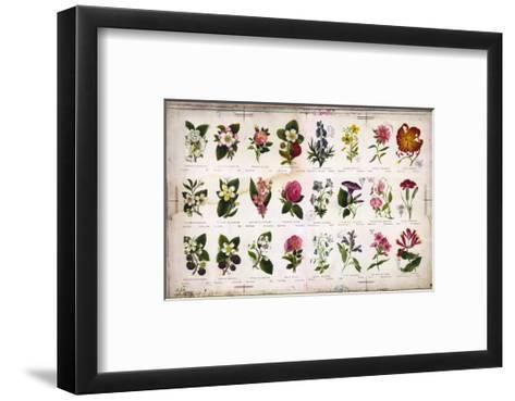 Vintage Botanical--Framed Art Print