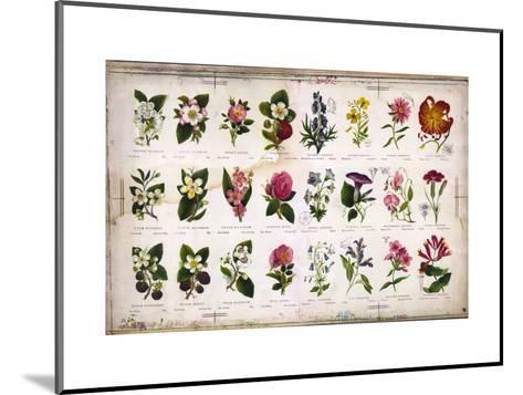 Vintage Botanical--Mounted Art Print
