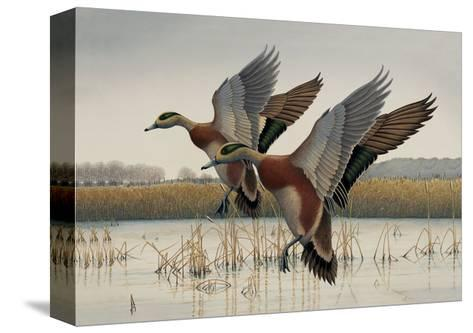 Ducks in Flight--Stretched Canvas Print
