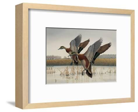 Ducks in Flight--Framed Art Print