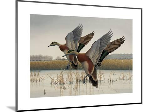 Ducks in Flight--Mounted Art Print
