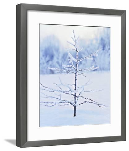 Tree in Winter Snow and Ice--Framed Art Print