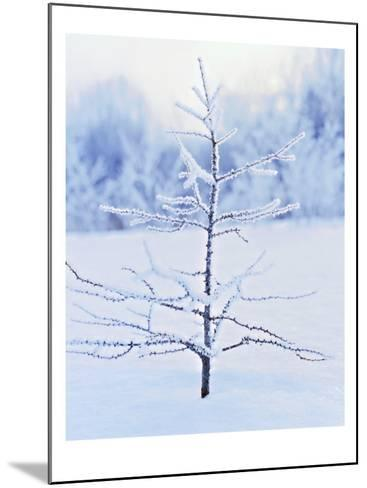 Tree in Winter Snow and Ice--Mounted Photo