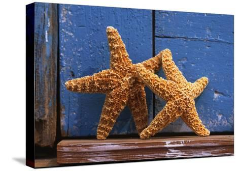 Two Starfish--Stretched Canvas Print