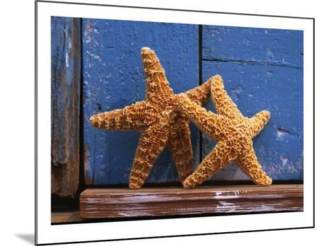 Two Starfish--Mounted Photo