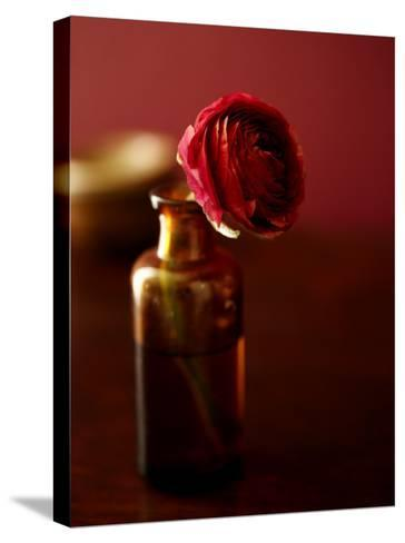 Red Flower in Glass Jar--Stretched Canvas Print