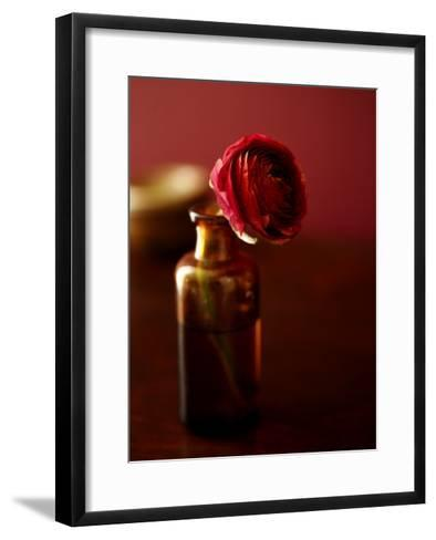 Red Flower in Glass Jar--Framed Art Print