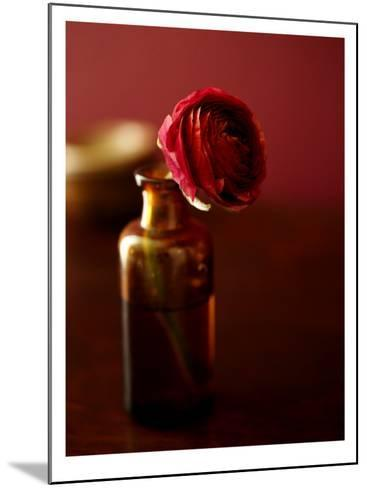Red Flower in Glass Jar--Mounted Photo