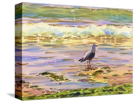 Seagull at Water's Edge--Stretched Canvas Print