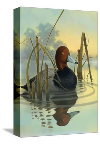 Red Headed Duck in Reeds--Stretched Canvas Print