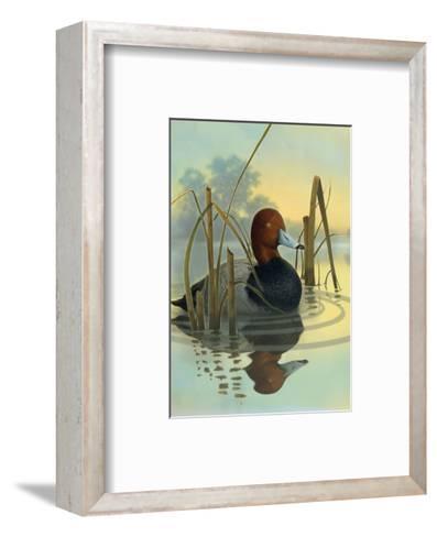 Red Headed Duck in Reeds--Framed Art Print