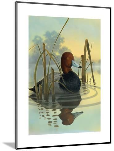 Red Headed Duck in Reeds--Mounted Art Print