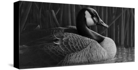 Duck--Stretched Canvas Print