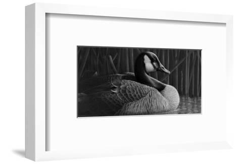Duck--Framed Art Print