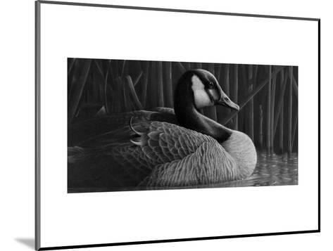 Duck--Mounted Art Print