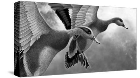 Two Ducks Taking Off--Stretched Canvas Print
