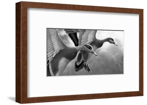 Two Ducks Taking Off--Framed Art Print