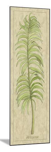 Arecaceae Leaf-Alicia Ludwig-Mounted Art Print