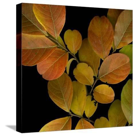 Vivid Leaves I-Vision Studio-Stretched Canvas Print