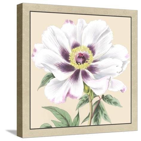 Peony Collection VI-Vision Studio-Stretched Canvas Print