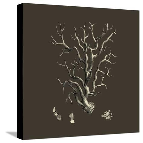 Chocolate & Tan Coral I-Vision Studio-Stretched Canvas Print
