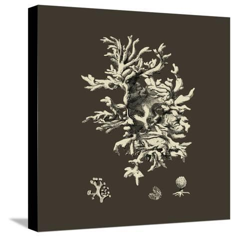 Chocolate & Tan Coral III-Vision Studio-Stretched Canvas Print
