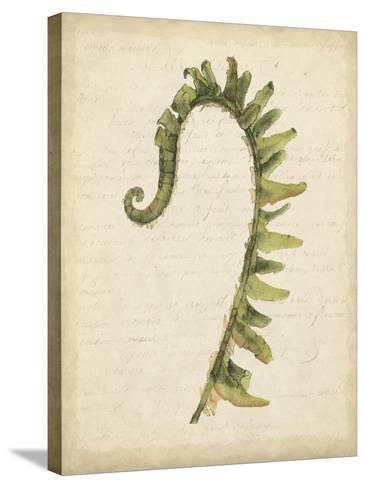 Fiddlehead Ferns IV-Jennifer Goldberger-Stretched Canvas Print