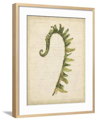 Fiddlehead Ferns IV-Jennifer Goldberger-Framed Art Print