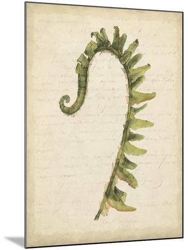 Fiddlehead Ferns IV-Jennifer Goldberger-Mounted Art Print