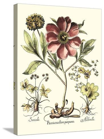 Framboise Floral I-Besler Basilius-Stretched Canvas Print