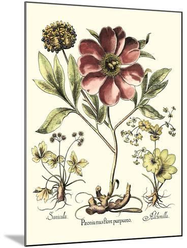 Framboise Floral I-Besler Basilius-Mounted Art Print
