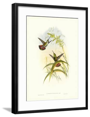 Gould Hummingbird I-John Gould-Framed Art Print