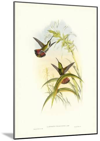 Gould Hummingbird I-John Gould-Mounted Art Print