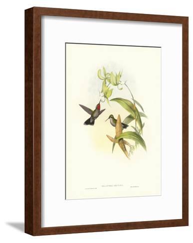 Gould Hummingbird IV-John Gould-Framed Art Print