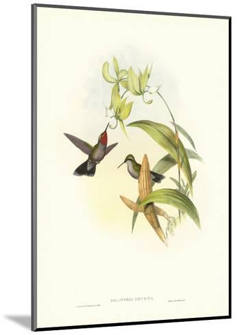 Gould Hummingbird IV-John Gould-Mounted Art Print