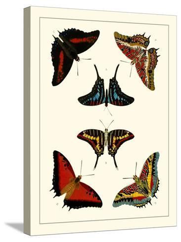 Cramer Butterflies II-Pieter Cramer-Stretched Canvas Print