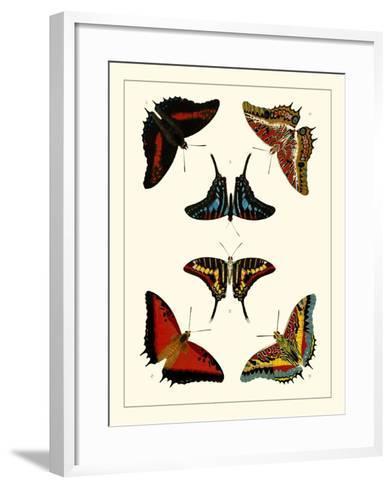 Cramer Butterflies II-Pieter Cramer-Framed Art Print