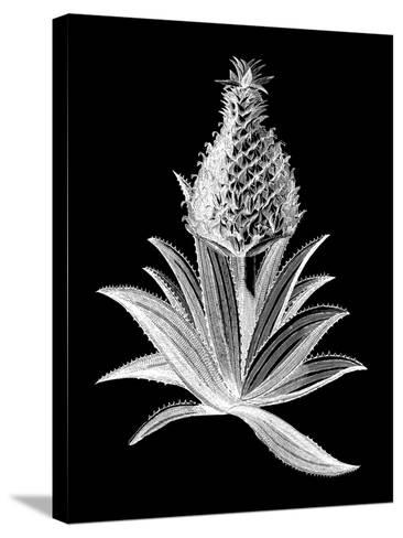 Pineapple Noir I-Vision Studio-Stretched Canvas Print