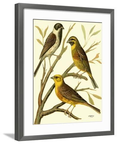 Domestic Bird Family I-W^ Rutledge-Framed Art Print