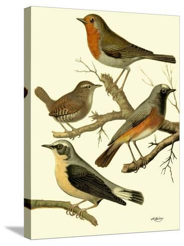 Domestic Bird Family III-W^ Rutledge-Stretched Canvas Print