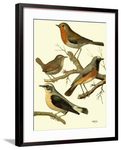 Domestic Bird Family III-W^ Rutledge-Framed Art Print