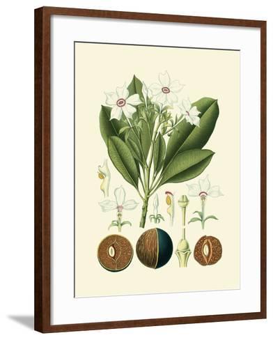 Botanical Glory IV-Vision Studio-Framed Art Print