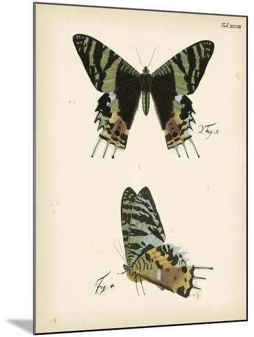 Butterfly Profile IV-Vision Studio-Mounted Art Print
