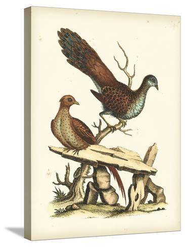 Regal Pheasants I-George Edwards-Stretched Canvas Print