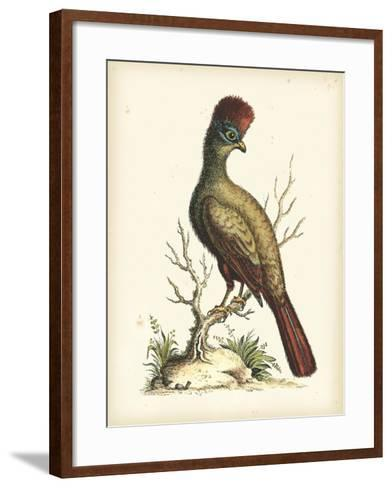 Regal Pheasants IV-George Edwards-Framed Art Print