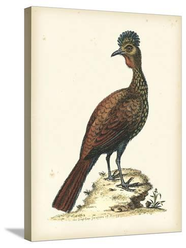 Regal Pheasants V-George Edwards-Stretched Canvas Print
