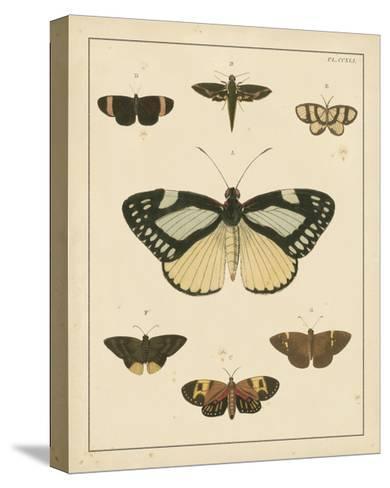 Heirloom Butterflies II- Cramer-Stretched Canvas Print